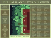 Palm and Cycad Garden
